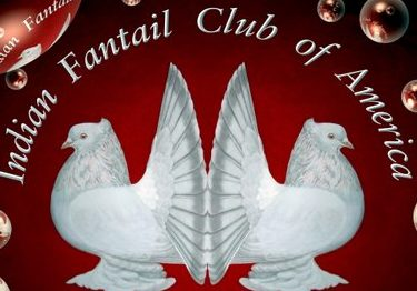 Indian Fantail Club of America
